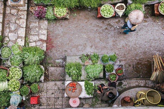 Gardening Benefit 6 BP