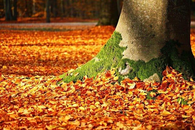 Leaf Mulcher 3 End