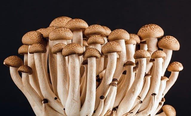Mushroom Kit 1 Start