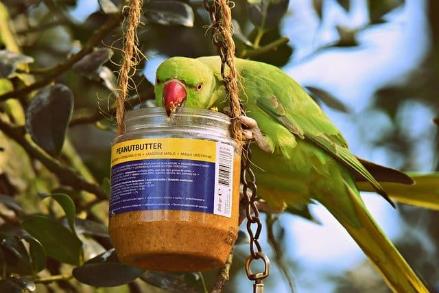 Peanut Butter Jar Birdhouse