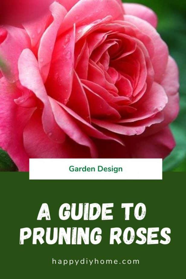 Pruning Roses 1