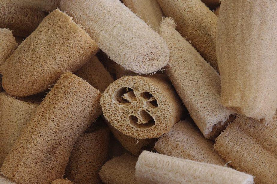 1 Loofah Sponges