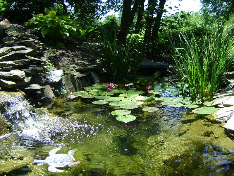 12 Pops of Greenery Pond