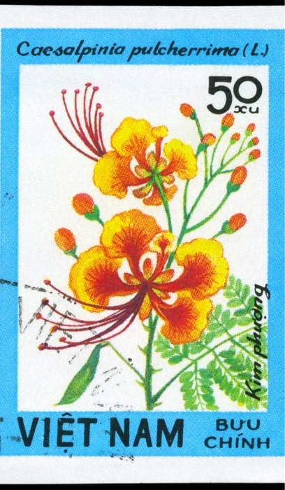 13. A Stamp printed in VIETNAM shows image of a Caesalpinia pulcherrima