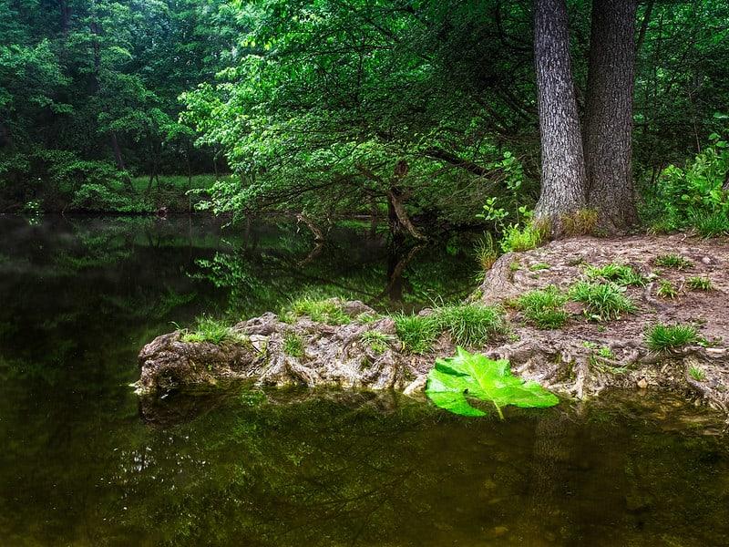 15 Island Sinking Into Pond