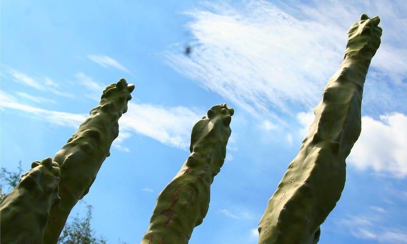 17 Totem Pole Cactus