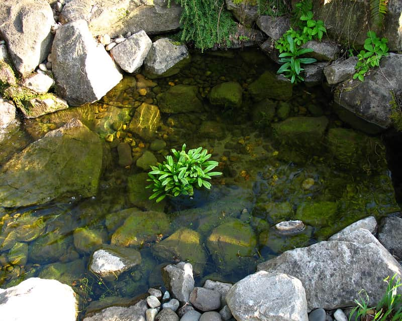 22 Naturally Finished pond