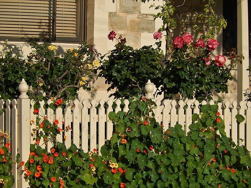23 Plants Climbing a Garden Fence