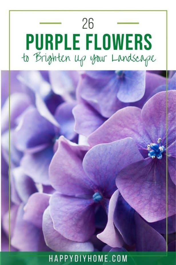 26 Purple Flowers 1