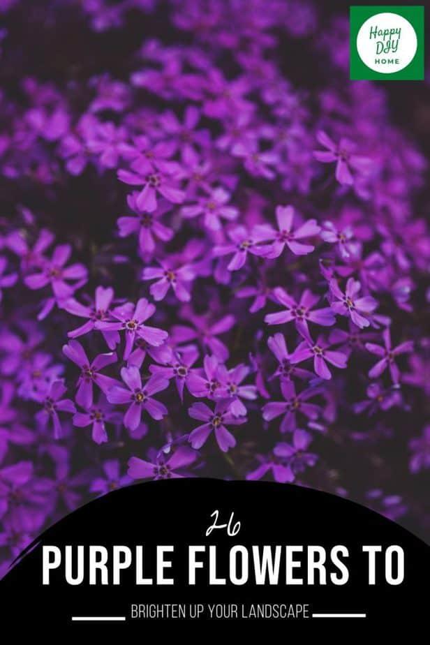 26 Purple Flowers 2