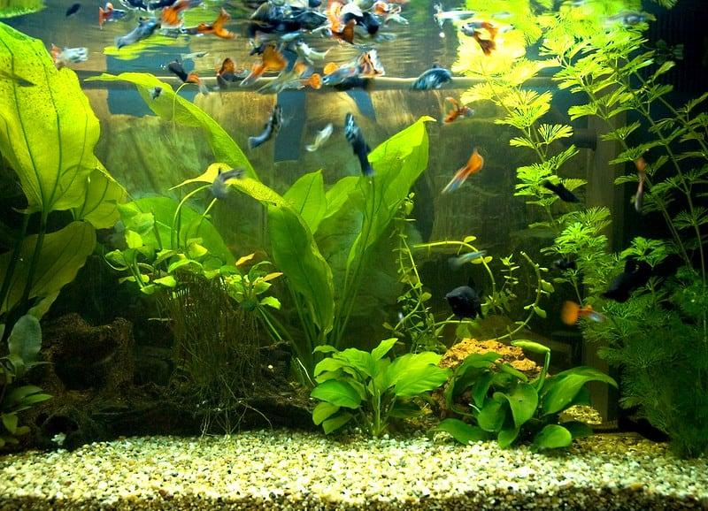 28 Aquarium Pond