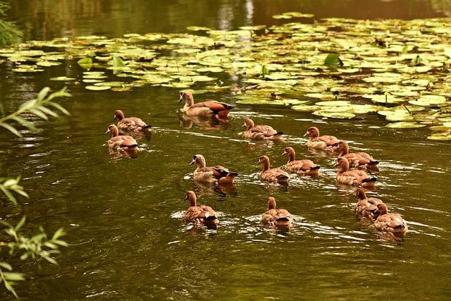 29 Wildlife Pond