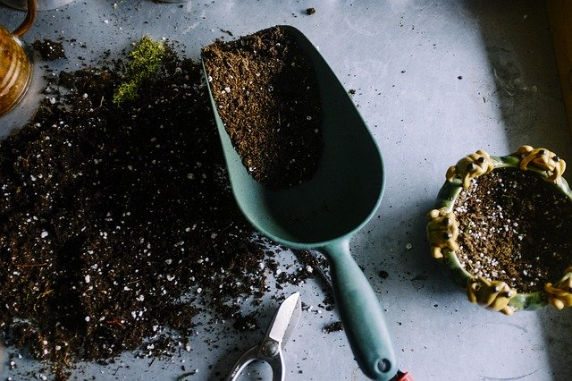 3 When potting or repotting always use a clean container and fresh soil