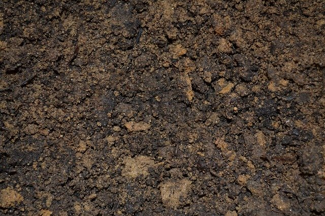 3 Your soil should be as light and well draining as possible