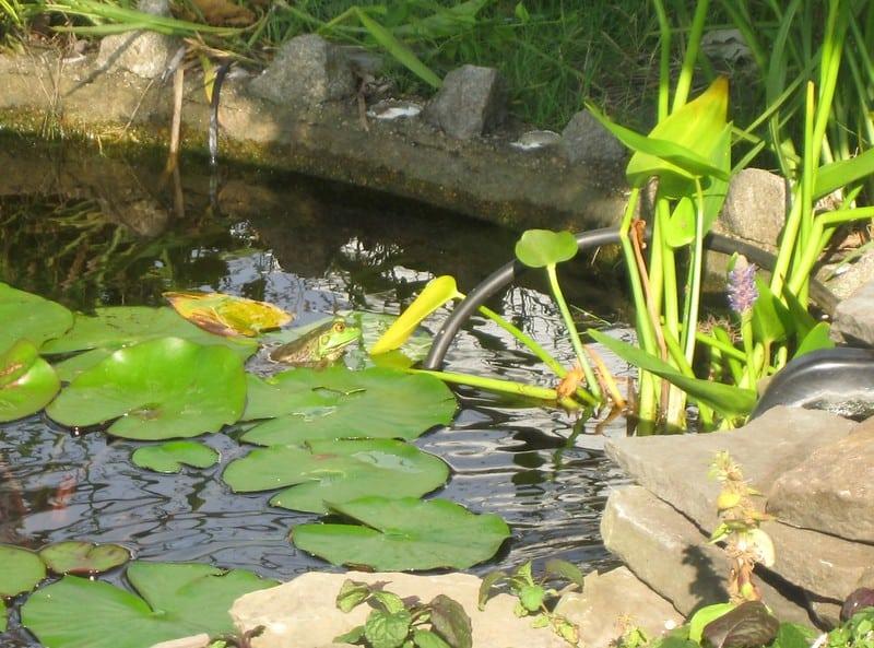 31 Square Pond