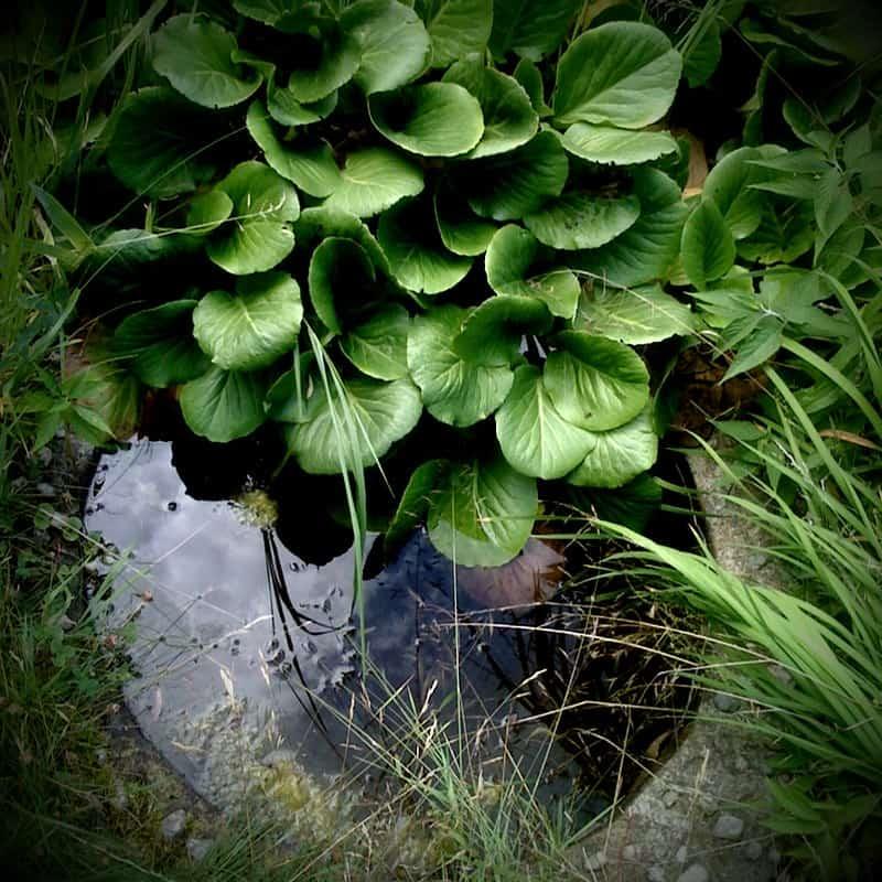 37 Tiny Puddle Pond
