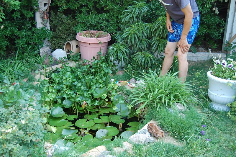 38 Lilly Covered Pond