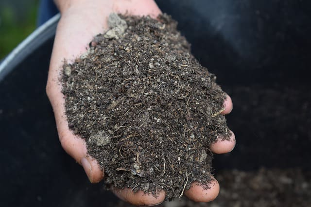 4 A top dressing of mulch or organic compost helps the soil to retain moisture