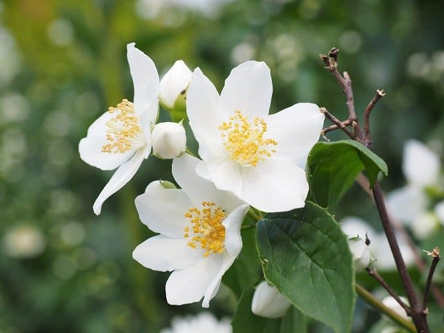 4 Once established these are pleasingly low maintenance plants