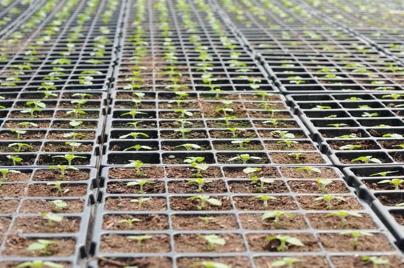 4 Seedlings Growing