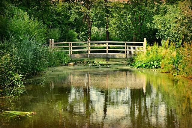 47 Lush Vegetation on the Ponds Sides