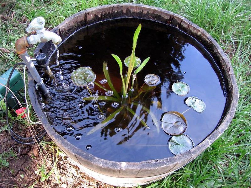 49 Whiskey Barrel Pond