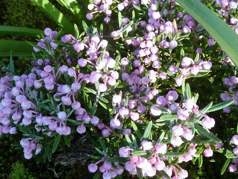 5 Bright Andromeda Flowers