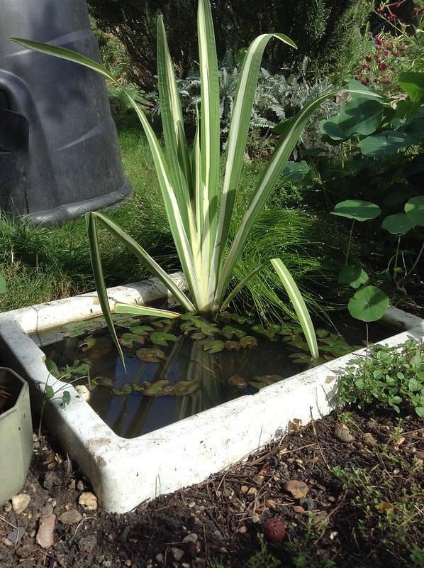 60 Sink Pond