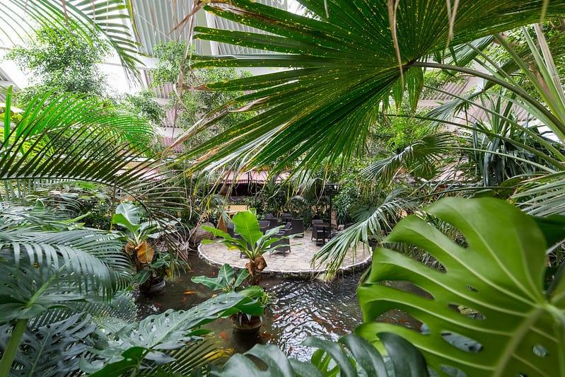 68 Tropical Pond