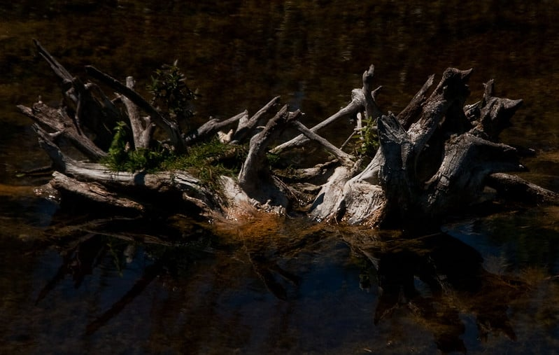 80 Driftwood with Pond