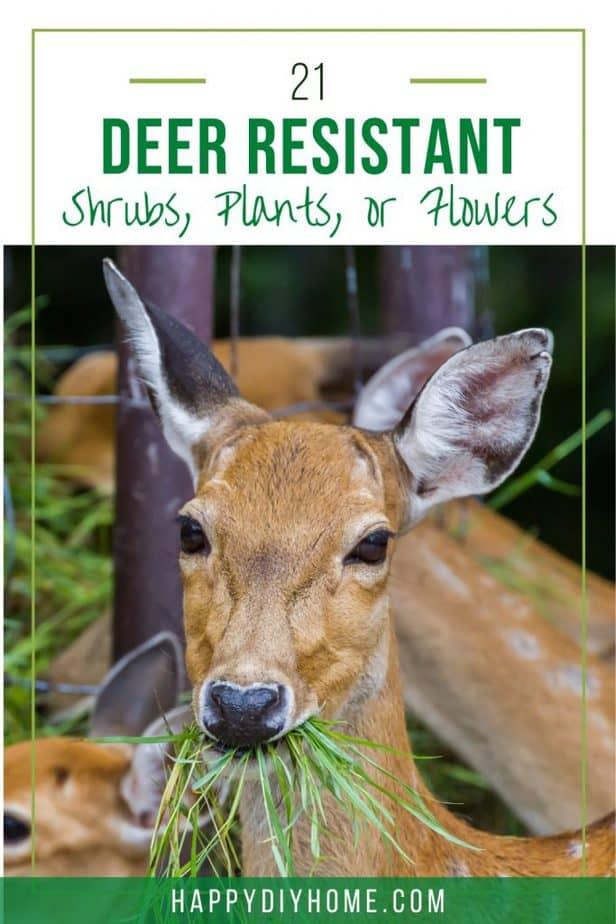 Deer Resistant 1