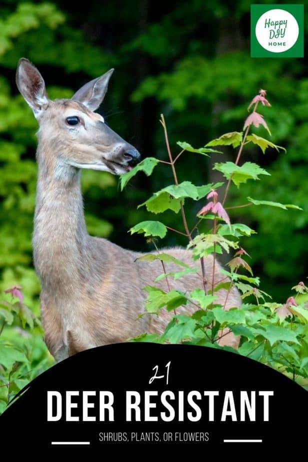 Deer Resistant 2
