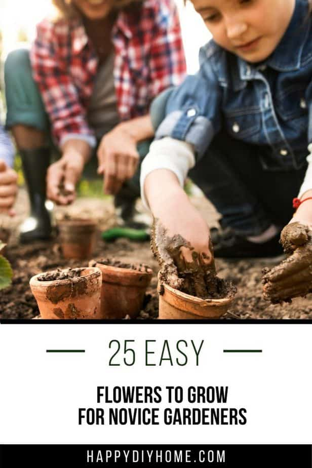 Easy Flowers to Grow 1