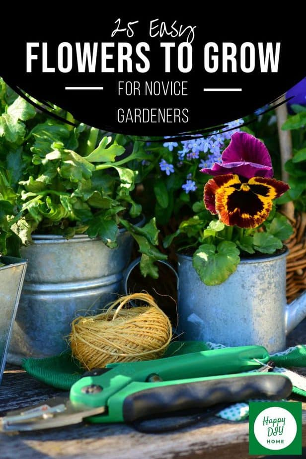 Easy Flowers to Grow 2