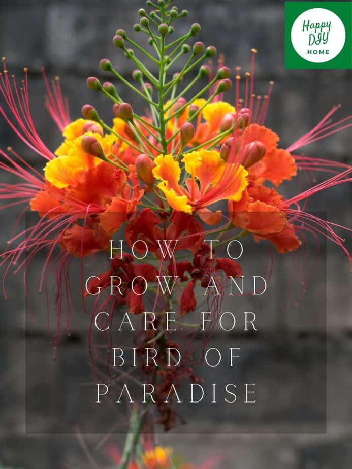 birds of paradise 2