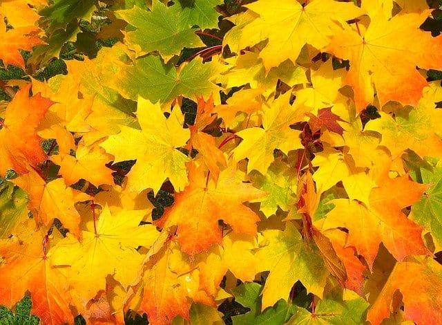 fallen leaf craft 14