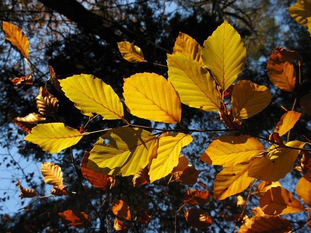 leaf rubbing 16