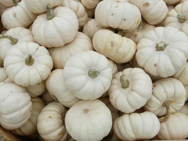 mini pumpkins 6