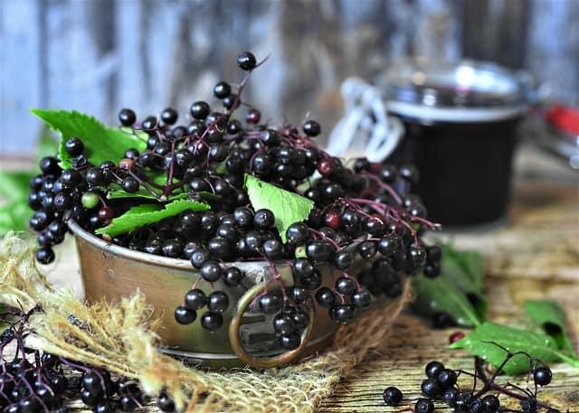 1 Fresh Elderberries