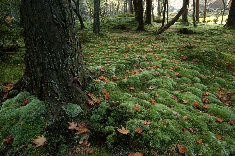 1 Moss Garden