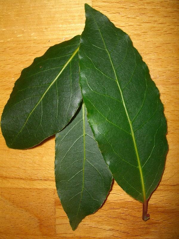 15 Bay Leaves