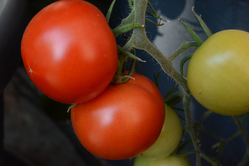17 Tomatoes