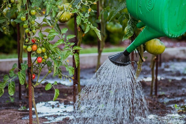 4 Liquid and water soluble fertilizers can be diluted into a watering can