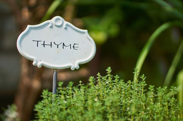 4 Thyme with Sign