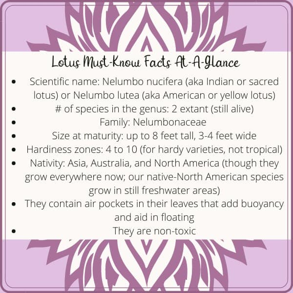 4. If youre going to be working with lotuses