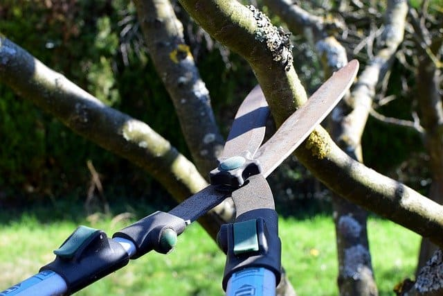 5 Always use sharp tools when pruning