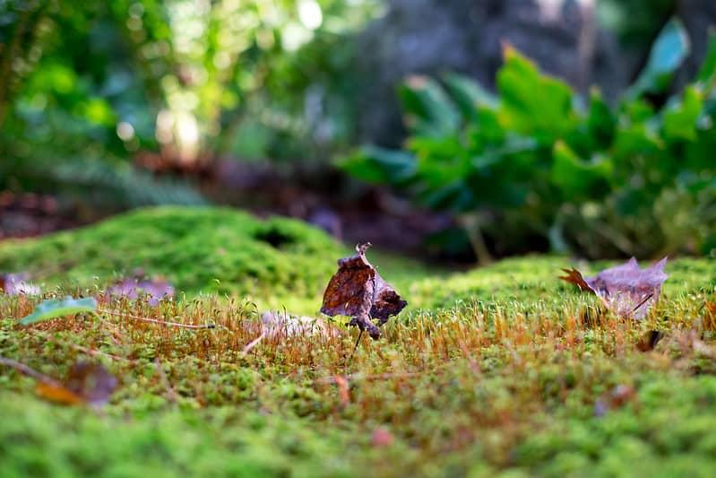 5 Fern Moss