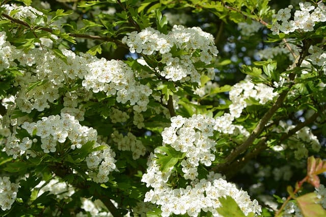 5 Regularly pruning helps to keep plants healthy