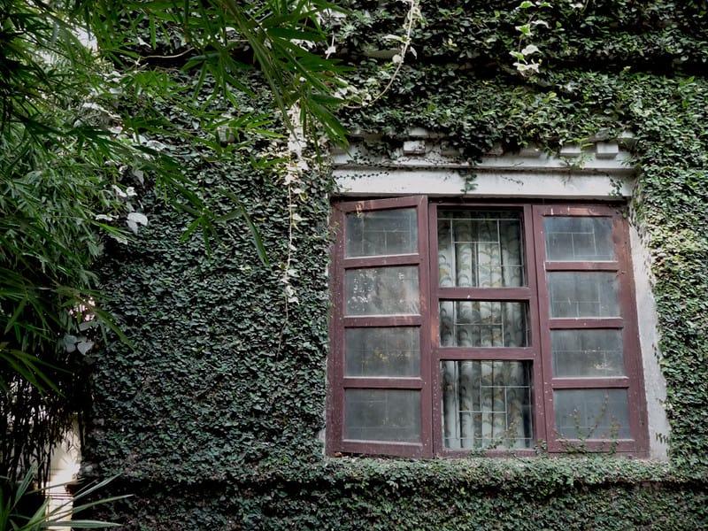 6 Nepalese Ivy
