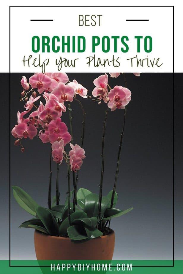 Best Orchid Pots 1